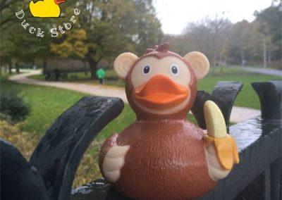 Monkey rubber duck Westerpark Amsterdam Duck Store